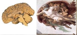 brain sistine chapel