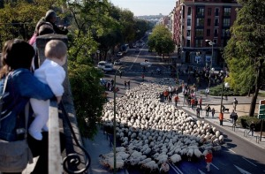 sheep-protest-2011-3[2]