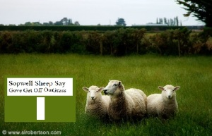 Three Sheep in Paddock