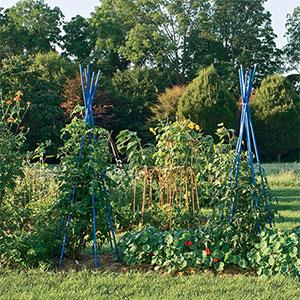 misc_garden_veg_300