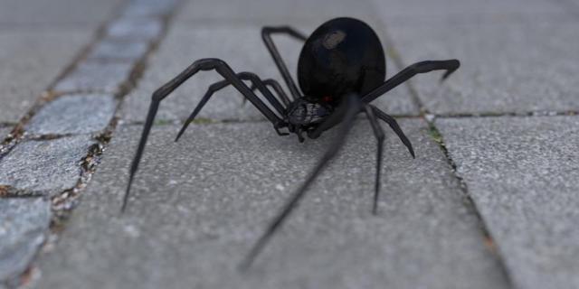 arachnophobia-1703991